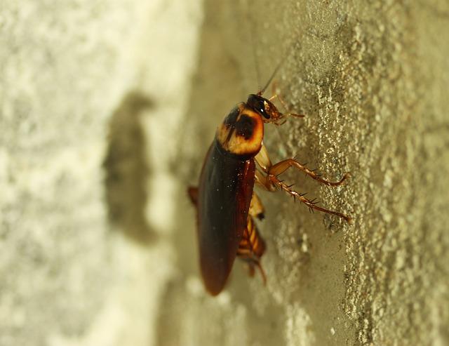 C mo eliminar las cucarachas con remedios naturales - Carcoma tratamiento casero ...